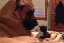 Cats and Dogs... A love/hate relationship / Cute pics of our little pets..