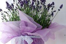 Lavender / by CasaBella Interiores