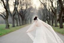weddings / by Peggy Pavlock