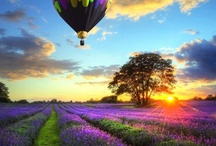 Simply Great Pictures- NATURE / These are photographs I find striking, beautiful, or magical. Maybe the colors are glorious, or the subject is captivating. It gives me pleasure to look at these photos, and I appreciate the photographers! / by Carla Brown