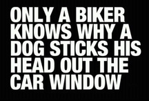 Bike Humor / Because the only thing better than riding your bike is SMILING while riding your bike.   / by Pedal Pirates Cycle Crew