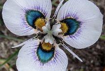 Flowers / by Deb Parmlee