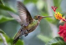 Birds / by Deb Parmlee
