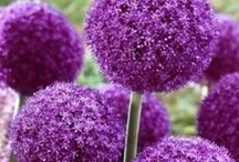 Purple, Pourpre, Porpora / by Tim