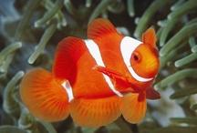The Color Orange / by Cheryl Ramey