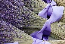 Lavender / by Cheryl Ramey