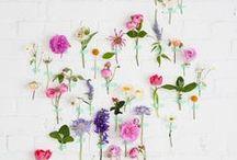 Blogerka i Kwiaty / Kwiaty na blogu zawsze są miło widziane