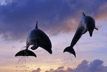 Ocean Wonders / by Debora Orrick