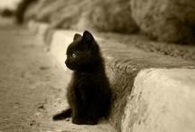 all things kitty / by Karen Vigil