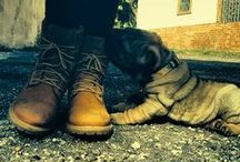 Tip-Top Timberlands / PlanetShoes is THE place to find Timberland boots and shoes for yourself or the whole family!