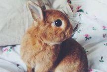 I love you mr bunny