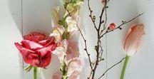 Voorjaarsbloemen / Voorjaar met bloemen