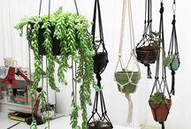 Hangplanten / Hangplanten