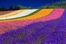 Fields of flowers / by Jeanette Marais-Cilliers