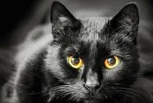 BLACK CATS / Never bad luck!! / by Janis Wallace