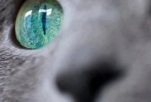 EYE OF THE CAT! / by Janis Wallace