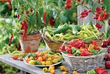 All About Vegetable Gardening