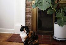 Cat Lady / It's no secret I love cats!