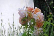 nature / dans mon jardin, des fleurs, des papillons, des bestioles ...