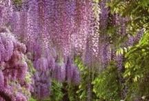 Dans le Jardin de Mes Reves ~ Un Jardin de Joie / by Daria Pew~a chaque oiseau son nid est beau