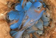 Birds/Oiseau / by Daria Pew~a chaque oiseau son nid est beau