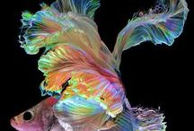 Fascinating Fish / Beautiful underwater life / by Misha Genesis