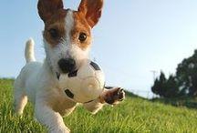 Animals Love Soccer Too!