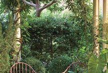 Landscaping/Outdoor Decor / by Denise Ingram