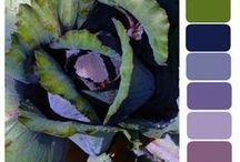 colour palettes / Colour inspiration