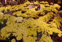 1,000 Yellow daisies / And all the other flowers I love