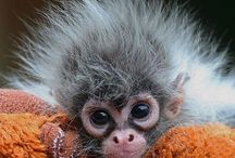Adorable Animal Babies / by C Cahayla