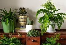 Indoor Gardening ideas / To be a gardener you don't need to stay in the garden, that is only the location. Create beautiful indoor gardens at home and cultivate the gardener spirit that you have!