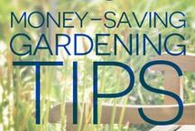 Gardening 101 / New to gardening? This board is going to help you with everything you need to start a garden. You will find tips & tricks to become an A W E S O M E gardener. Follow us and keep up to date :)
