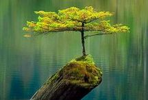Trees / Heres the 101 on everything there is to know about trees! Learn how to grow and take care of trees while enjoying beautiful pictures as well!