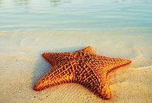 The Sea / I ♥ ℓovє♥ sєa