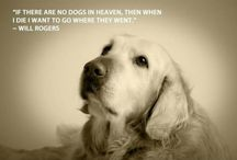 Dogs / by Mel Rhodes