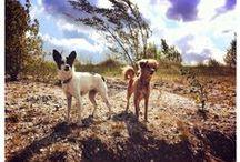 Dogs - Hunde