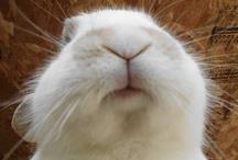 Bunny Love / by Erin Mac
