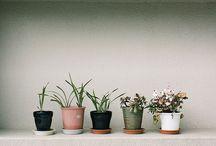 PLANT / by Tegan Klenner