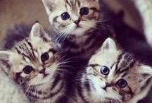 Kittens (=^-^=)