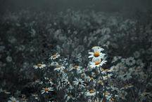 Beautiful Art / by Julie Walvatne