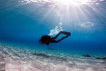 underwater photography / underwater photography, underwater pictures, underwater animals, underwater creatures, underwater scene, fish, underwater life, diving, shipwrecks, coral reefs