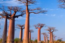 Africa Travel / Travel inspiration for visiting the incredible, diverse and beautiful countries on the African continent.