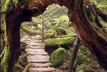 Pathways / by Jeri Lynn
