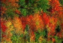 Fall / by Jeri Lynn