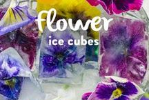 #Cubeit / This board celebrates the pairing of ice and flowers. There are  lots of edible flowers, chilled cocktails, ice pops and ideas of ways you can ShowCase blooms in ice or chilled food using the power of your fridge or freezer. #samsung #showcase #edibleflowers #floral #flowers #ice / by Maybush Studio - Family & Lifestyle Blog