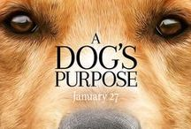 A Dog's Purpose / A Dog's Purpose hits theaters January 2017!