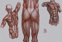 Anatomy: Body & Torso / Learning and reference material for drawing the human body through understanding the structure of bones and muscles. Includes studies of the torso, shoulders, chest, back and body composition. Multiple perspectives and poses. / by clarioncat