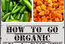 Organics / Organics - everything organic