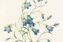 {botanically beautiful}